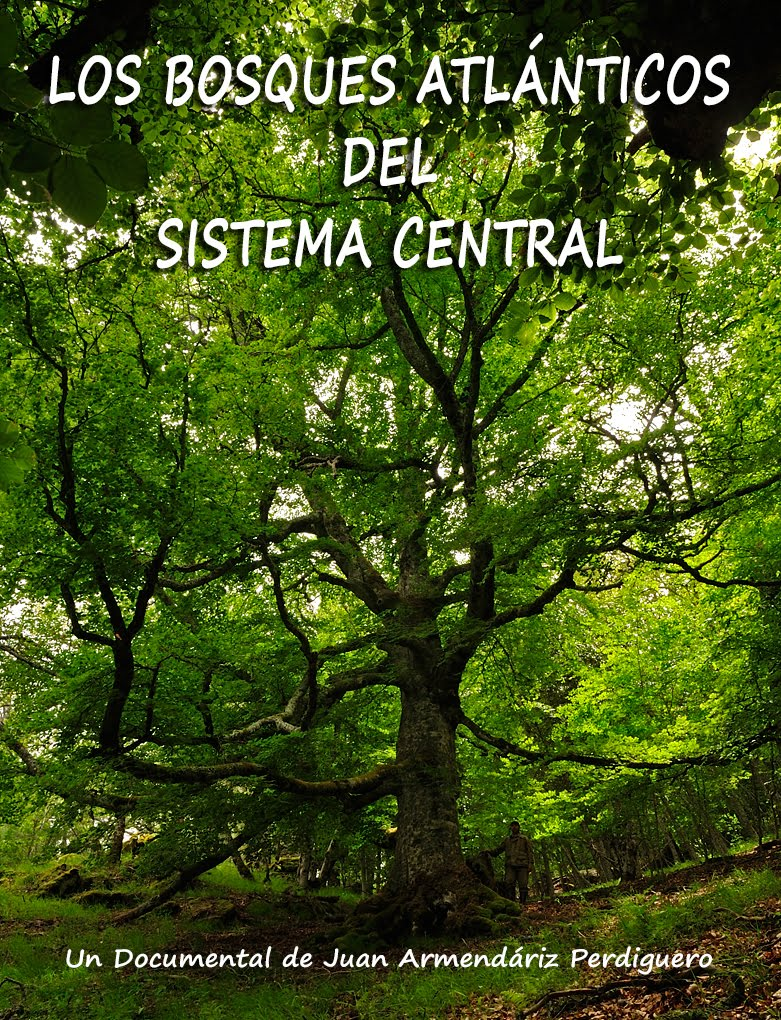 DOCUMENTAL. LOS BOSQUES ATLÁNTICOS DEL SISTEMA CENTRAL. PRIMAVERA