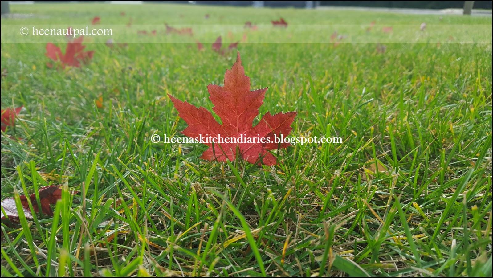 Heena\'s Kitchen Diaries: Season of Fall colors | Autumn 2015