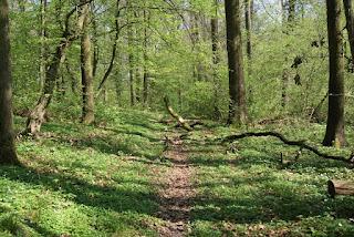 Ein Waldtrampelpfad inmitten von Bäumen