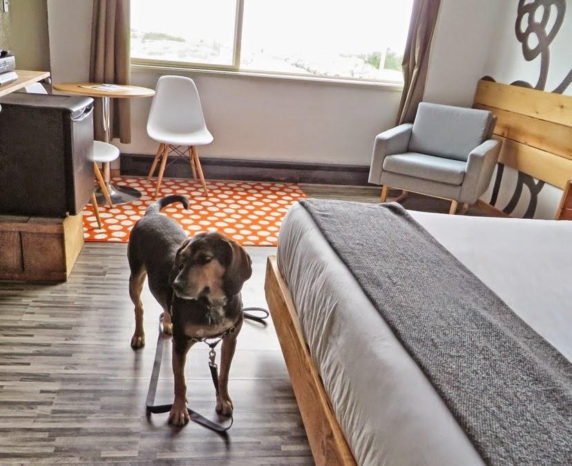 Cinnamon Checks Out The Dog Friendly Room
