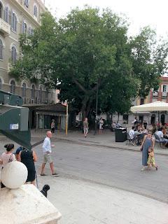 Bella piazza, anche grazie alle peculiarità di un albero