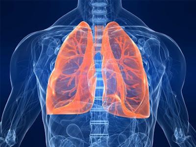 paru yaitu salah satu organ yg bekerja menjaga kekebalan badan Resep Alami Membersihkan Lendir di Paru-Paru