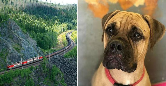Собака прошла 200 км до Красноярска, чтобы вернуться к бросившим ее хозяевам