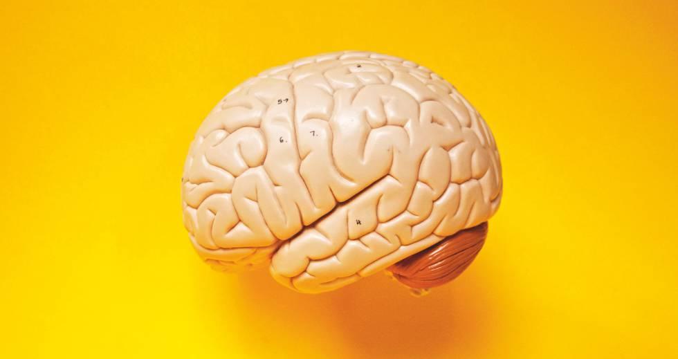 Cinco Claves Para Mantener El Cerebro Joven Sea Cual Sea