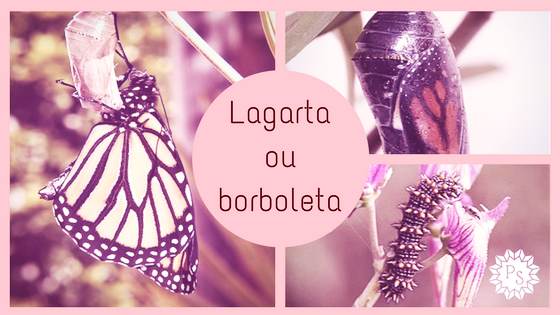 lagarta ou borboleta
