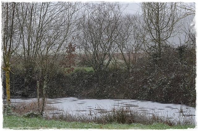 La mare du jardin sous la neige