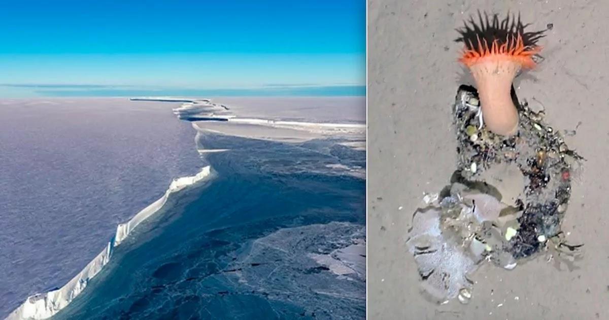 German Scientists Capture Images Of Antarctica's Seafloor After Iceberg Breakaway