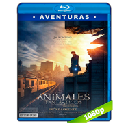 Animales fantásticos y dónde encontrarlos (2016) Full HD 1080p Latino