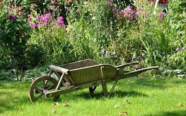 7 Easy Step Planting Lawn| Lawn Tip