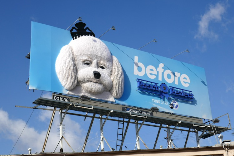 Pooch Perfect Before 3D billboard installation