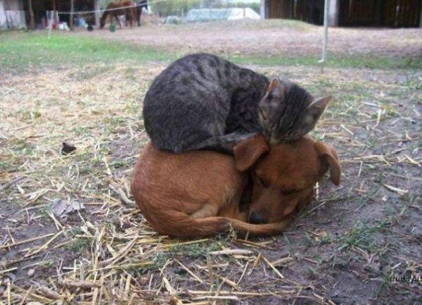 Cand cainele devine pat pentru pisica