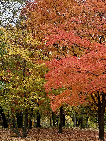 fall foliage in Humboldt Park