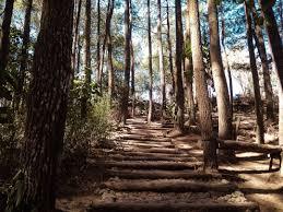 Cinta Bersemi di Hutan Pinus Mangunan (Cerita Silat Harimau Merapi Jilid 9)