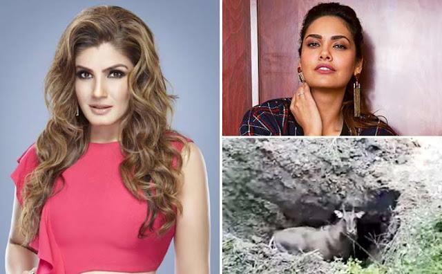 नीतीश सरकार पर भड़कीं रवीना टंडन और ईशा गुप्ता... - newsonfloor.com