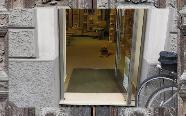 Bologna to Parma - Dog in a store