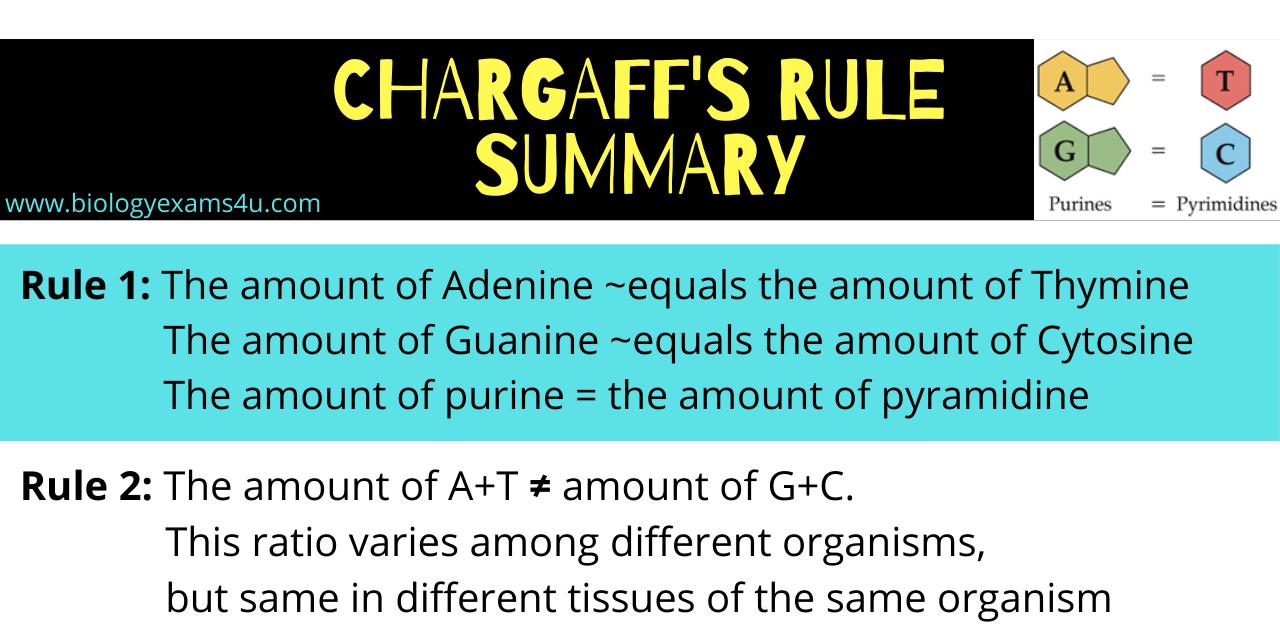 Chargaffs Rule Summary