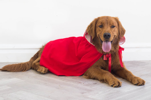 do it yourself divas: DIY Little Red Riding Hood Cloak Halloween Costume for Dog or Pet - Video Tutorial