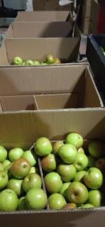 harga apel malang di jakarta