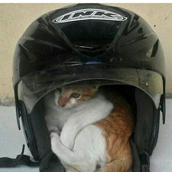 Catatan Hati seekor Kucing Liar