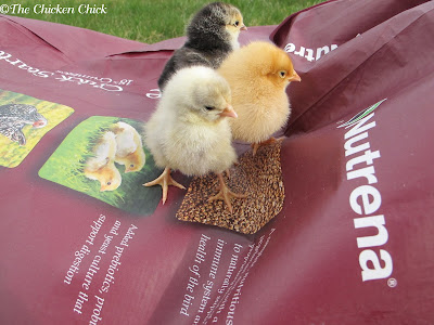 STARTER FEED: nutritionally complete ration for chicks up to 8 weeks old, available in both medicated and unmedicated varieties.