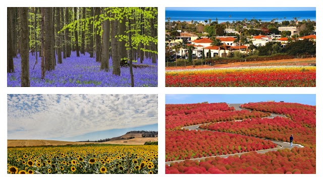 The brilliant flower fields in the world