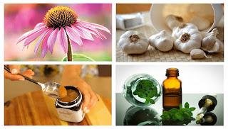 5 Natural Antibiotics