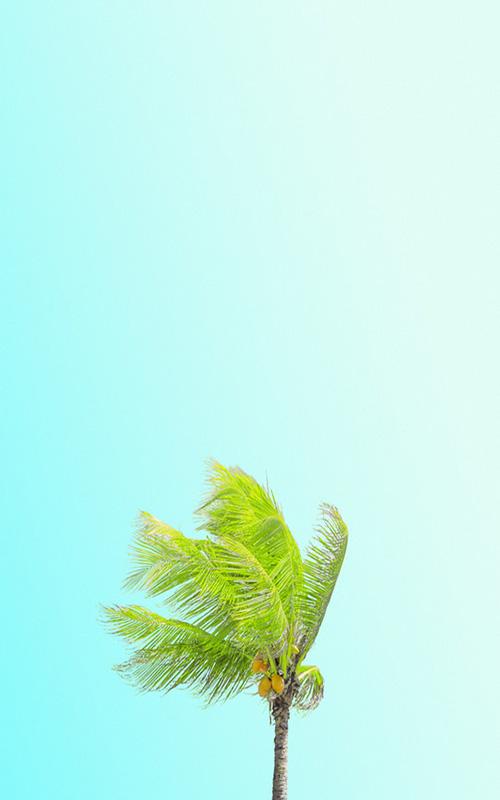 palmier, cocotier, vacances, ciel bleu