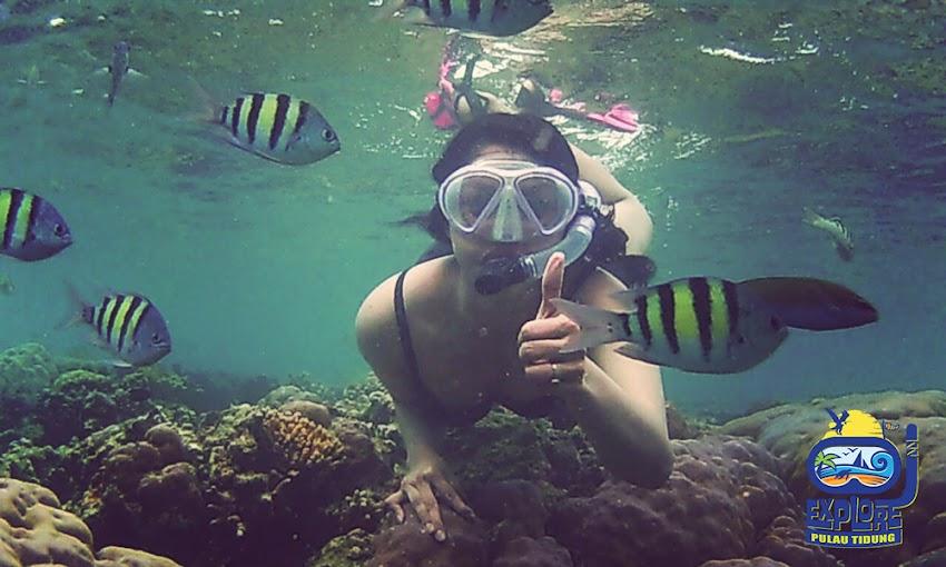 pemandangan karang dan wisata pulau tidung
