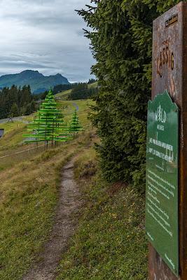 Waldwellness-Weg Saalbach | Regenwandern im #HomeofLässig | Waldbaden in Saalbach 07