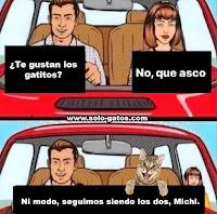 gato en el coche meme de humor