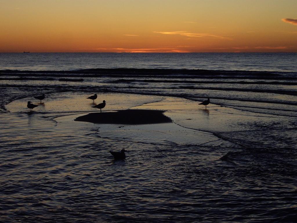 Międzyzdroje plaża dziki warchlaki mewy Morze Bałtyckie