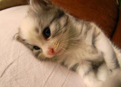 güzel-kedi