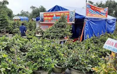 Bình Định: Mai kiểng Tết Canh Tý bán sớm, người trồng cười tươi thu chục tỉ đồng