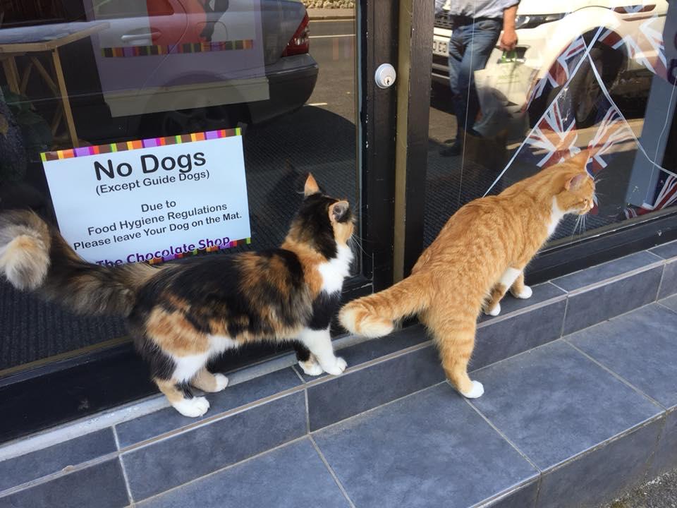 Pelihara kucing jantan dan betina