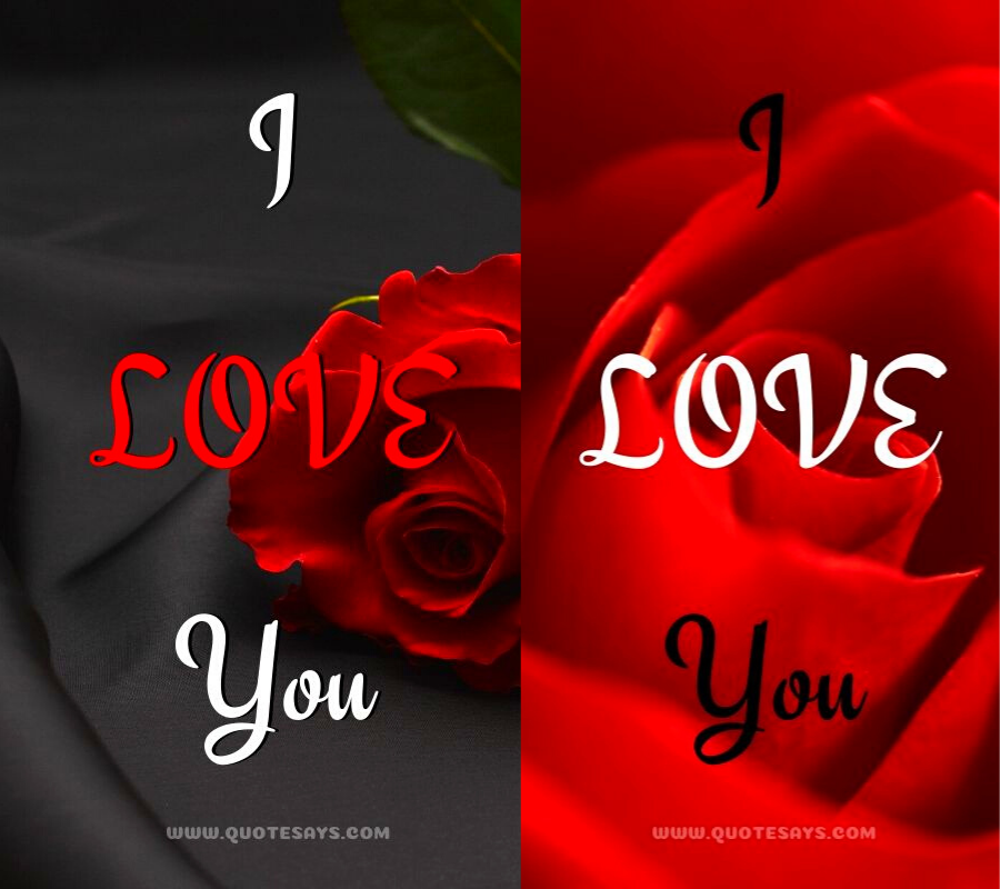143 Beautiful I Love You Images With Roses For Love Quote Says