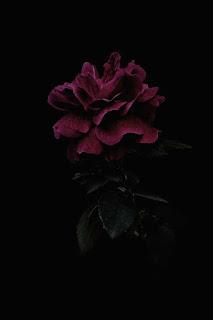 صور خلفيات سوداء - خلفيات موبايل سوداء hd   صور سوداء مجمعة 2021
