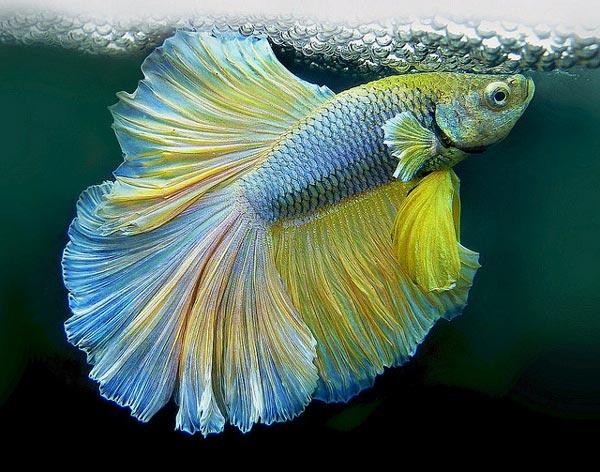 Ресторан Золотая рыбка  свадебный банкет банкетный зал