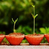 Perbedaan Pertumbuhan dan Perkembangan Makhluk Hidup