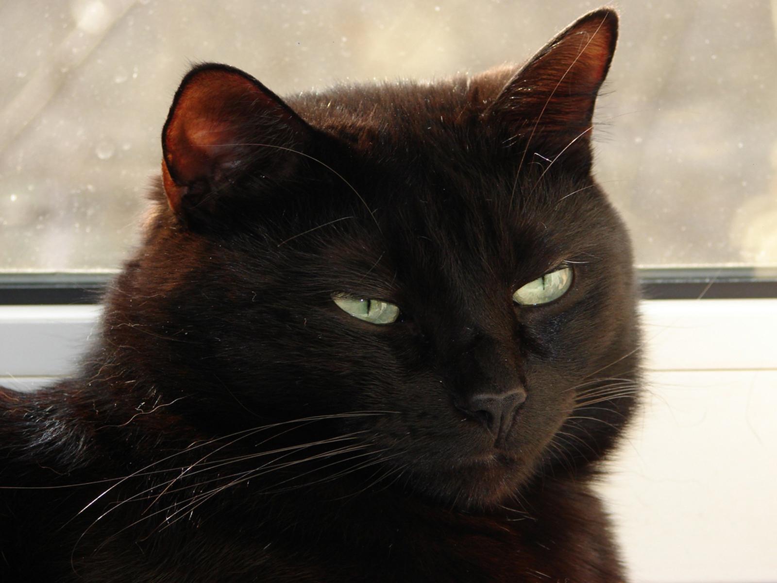 gato - photo #8
