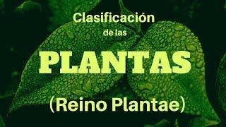 Clasificación natural del reino vegetal