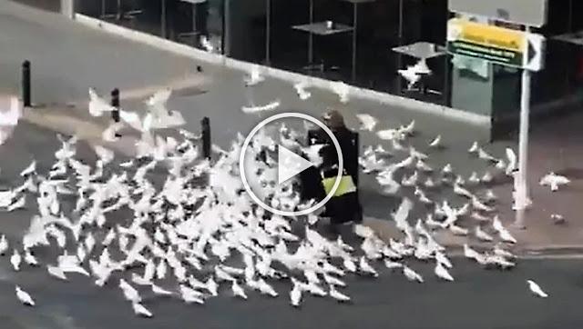 """Като сцена от филма на Хичкок - """"Птиците"""": В Испания изгладнели гълъби нападат хора (ВИДЕО)"""