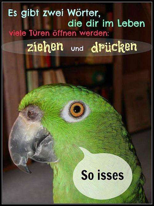 Max Papageiengeschichten Der Spruch Des Tages 32
