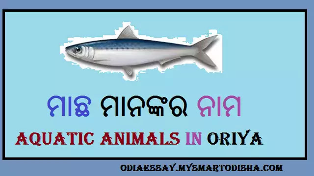 Different Kinds of Aquatic Animals in Oriya | All Fish Names in Odia