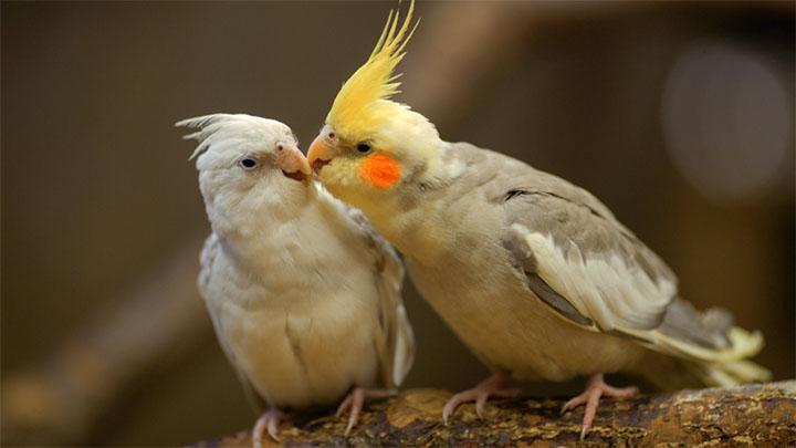 pet birds for sale near me
