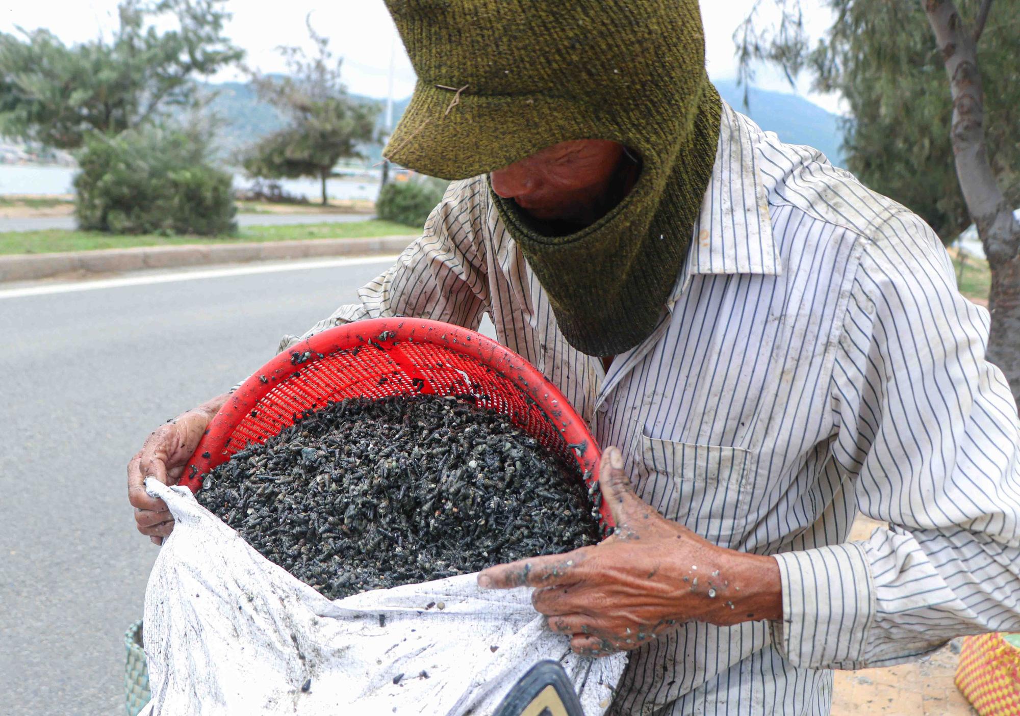 Ninh Thuận: Ngụp lặn cả ngày mò con ốc đen, tuy vất vả nhưng nông dân cũng kiếm 200.000 đồng/ngày