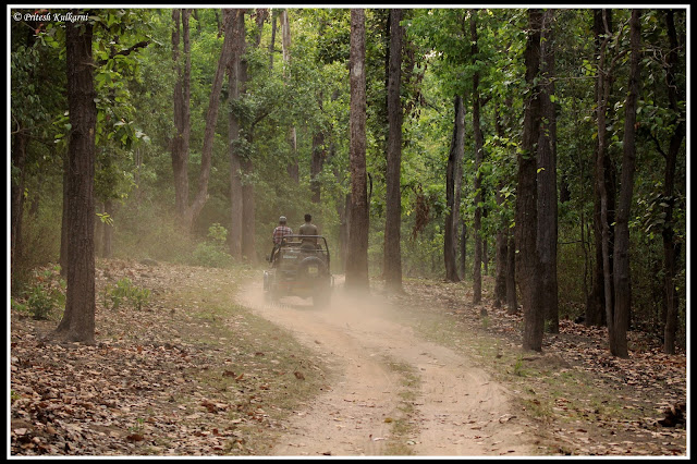 Kanha Forest journey: In search of Royal Tiger