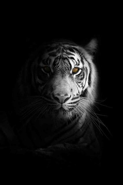احلى صور حيوانات 2020 ، صور حيوانات غريبة و خلفيات حيوانات hd