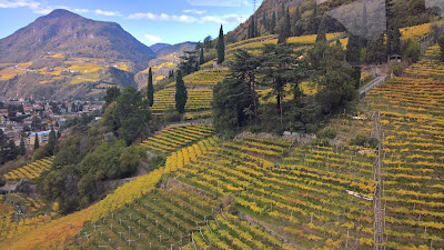 I can't get enough of the manicured sloping vineyards around Bolzano.