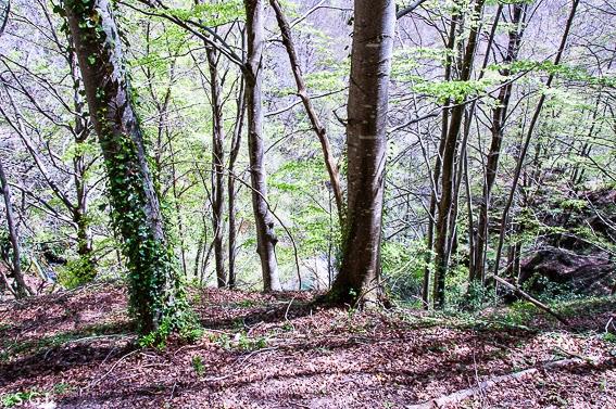Bosque del Nacedero del Urederra en la sierra de Urbasa