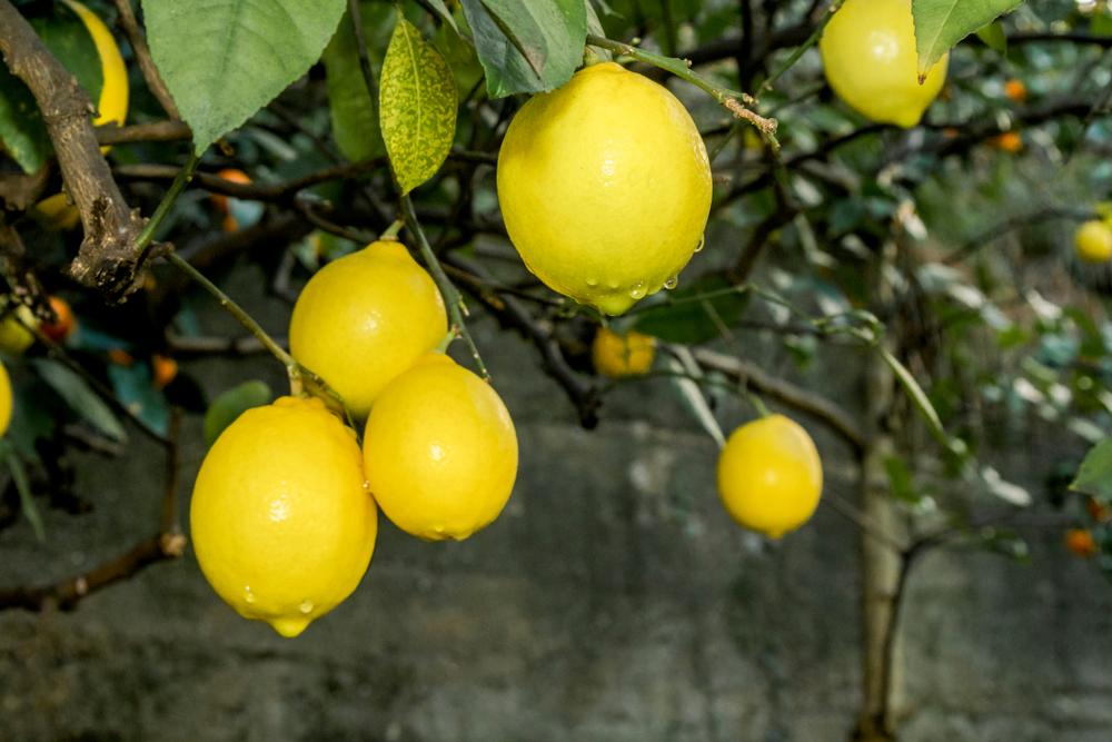"""أسرار عن """"الليمون"""" لا تعرفها"""